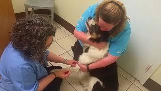 #21. Ветеринарная клиника в штатах. США и животные.