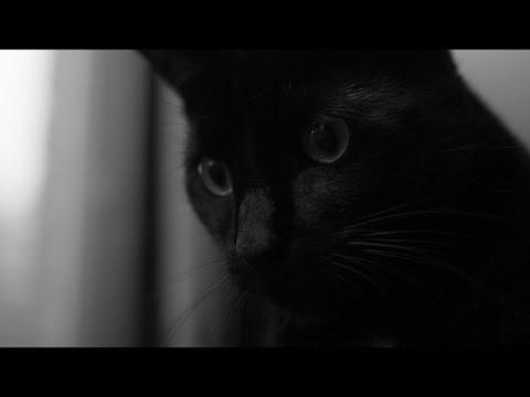 Chat Noir -  a film