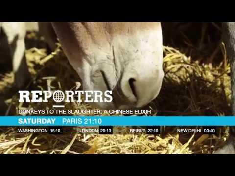 فرانس 24:Donkeys to the slaughter: a Chinese elixir