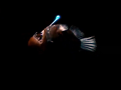 strange-bioluminescing-deep-sea-animals-|-blue-planet-|-bbc-earth