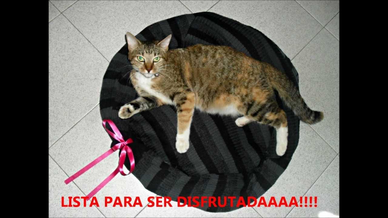 Como hacer una cama para gato o youtube - Cama para gato ...