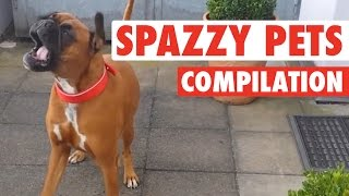 Crazy, Silly Pets Spazz Out || Hilarious Pet Video Comp
