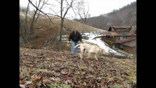 Training Your Shed Antler Dog!