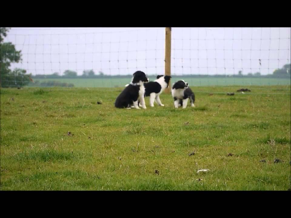 Dog Training Skipton
