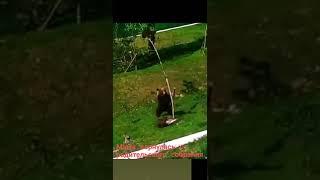 Смешное видео животные