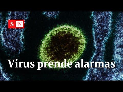 Nipah: un nuevo virus que alarma a los científicos | Videos Semana