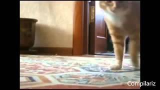 Кошки зажигают Танцуют все