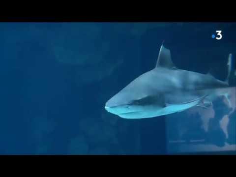 Musée océanographique de Monaco : toute une histoire