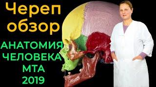 Череп обзор (череп в целом)💀   Анатомия человека [2019]✅