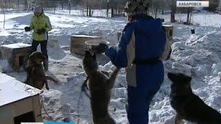 Вести-Хабаровск. Отловом бродячих собак заниматься некому
