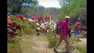 LIST OF CULPRITS: Mau Forest settlers bought land with goats