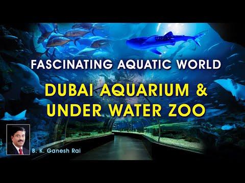 FASCINATING AQUATIC WORLD – DUBAI AQUARIUM & UNDER WATER ZOO