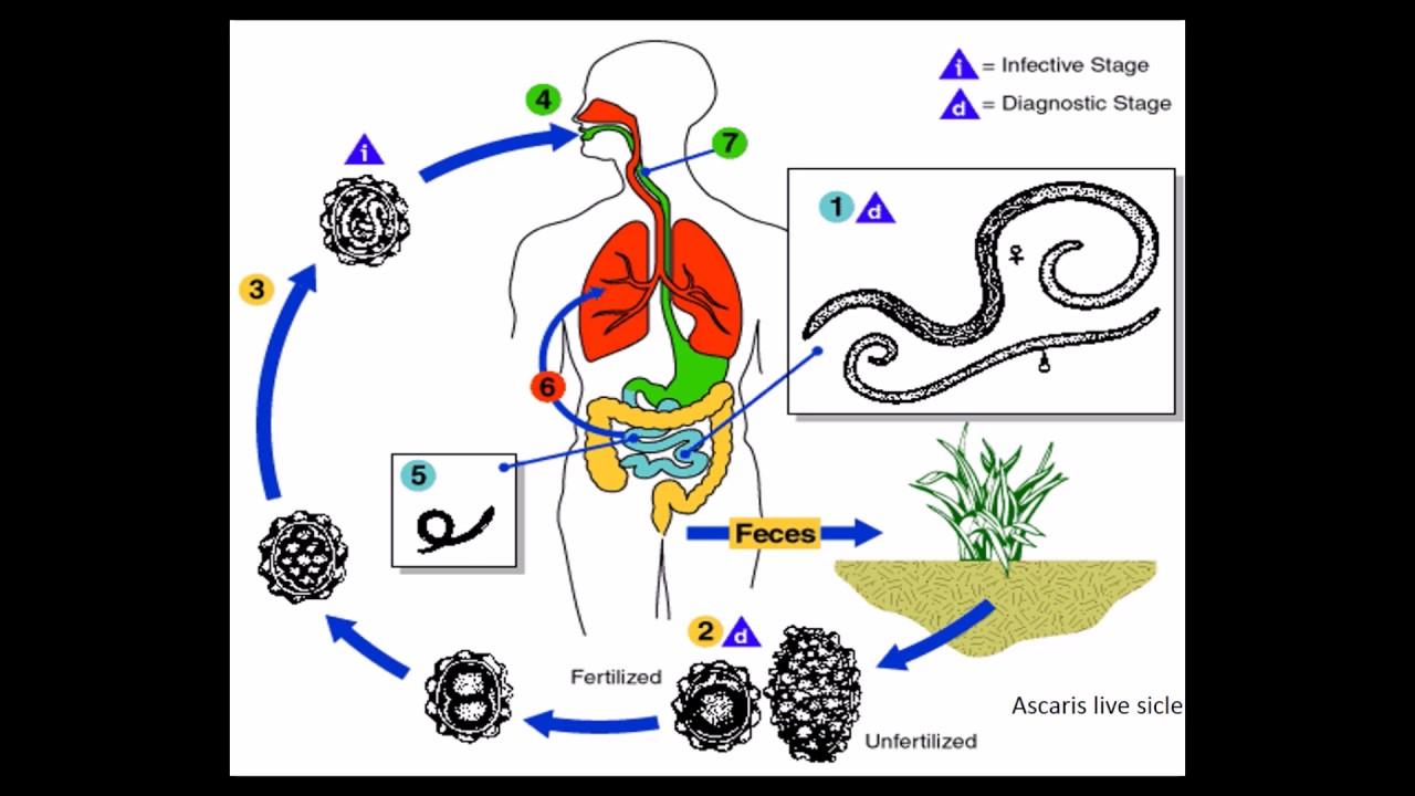 gége papillomatosis humán papillomavírus cheloo tonitza
