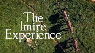 The Imire Experience - Rhino and Wildlife Conservation in Africa