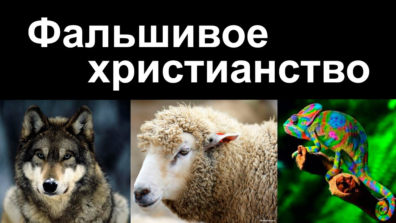 Овца для секса
