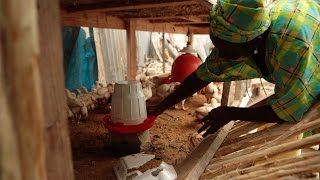 Escaping Poverty: Community Chicken Project