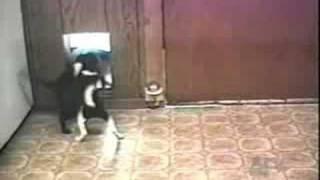 בעלי חיים עושים צחוק
