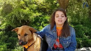 ילדים מדברים כלבים - כלבי שירות ונחייה