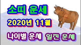 11월 소띠 운세 - 2020년 11월 경자년 정해월 소띠 일진 사주 운세보기