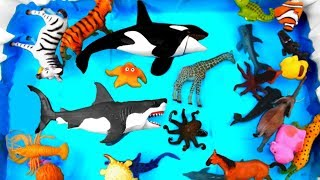 Learn Sea Animal and Wild Animals Names Safari Toys For Kids