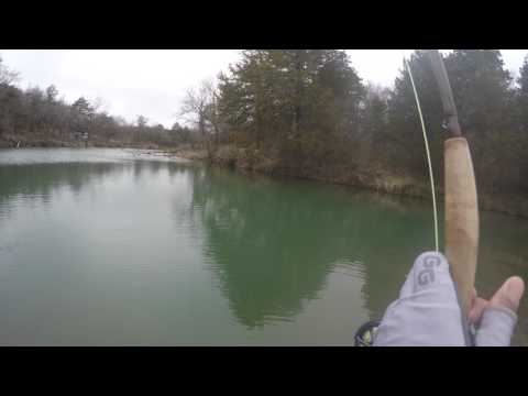 20+ Inch Rainbow Trout In Blue River