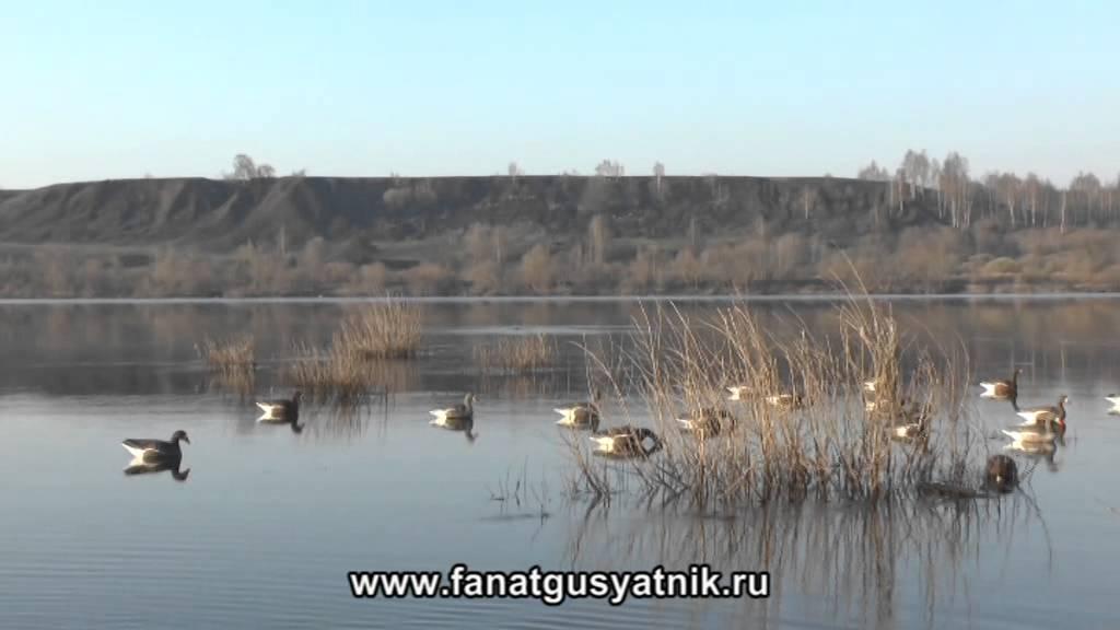 Видео про охоту на уток весной фото 524-403
