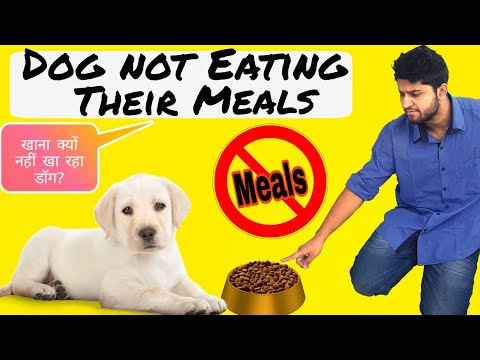 Dog Appetite Loss |डॉग के खाना ना खाने के कारण |Dog khana nahi khata|my dog is not eating food/Meals