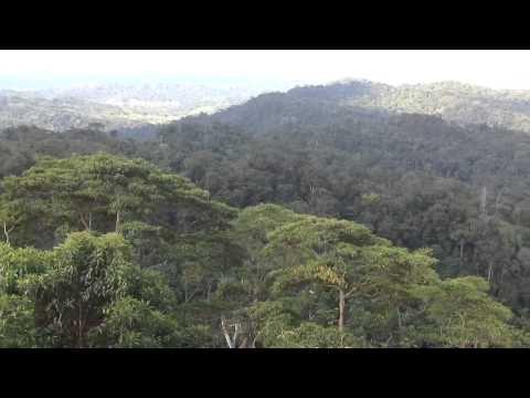 View Of Amazon Basin Near Rurrenabaque, Bolivia