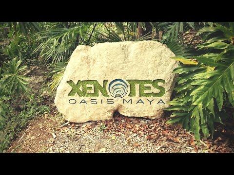 Xenotes: El Oasis entre Cancún y Puerto Morelos.