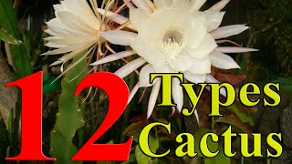 Cactus Plants - 12 Types of Cactus you can Grow at Home