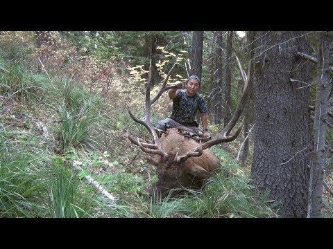 The Sound of September - Big bull elk at 7 yards