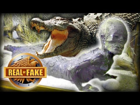 HALF HUMAN / HALF ALLIGATOR FOUND - real or fake?