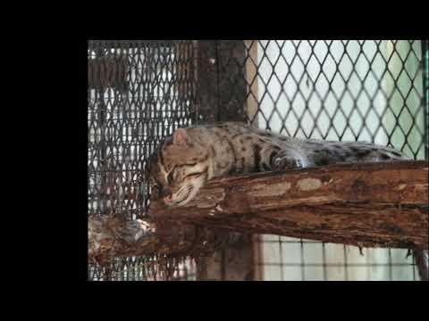 Yangoon Zoo Myanmar