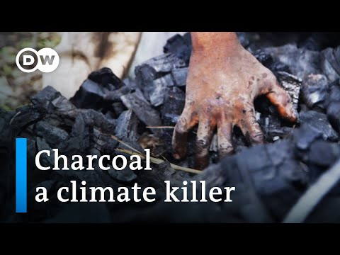 From rainforest to charcoal | DW Documentary