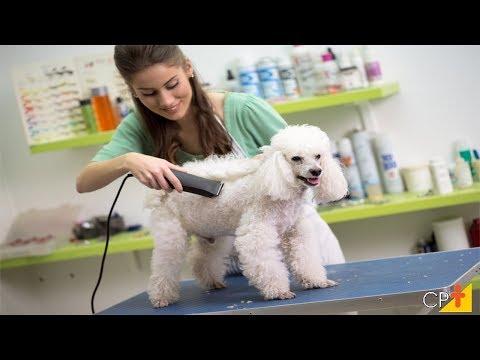 Clique e veja o vídeo Curso a Distância Como Montar um Pet Shop - Com Banho, Tosa e Atendimento CPT