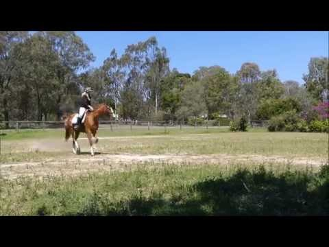 portia's-gorgeous-soft-slow-lopey-canter-on-loose-rein-open-paddock
