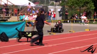 Drug Detection Demo -  2014 Canadian Police Canine Championship  - Kelowna -  Youtube