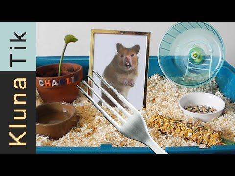 Kluna got a HAMSTER for ANIMAL DAY!!! Kluna Tik Dinner #35 | ASMR eating sounds no talk