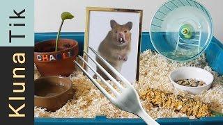 Kluna got a HAMSTER for ANIMAL DAY!!! Kluna Tik Dinner #35   ASMR eating sounds no talk