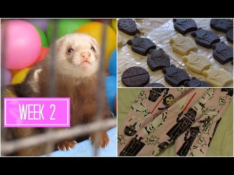 Vegan Star Wars Chocolates, Cute Animals, and Bowling | Week 2