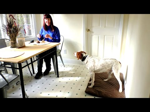 Puppy Training, Dax, Brittany, Day 11: Make Yourself At Home | Manners Please