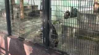 2011年1月に訪れた上海動物園の様子です。