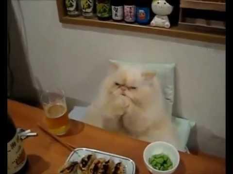Котята, Кошки, приколы, очень смешно