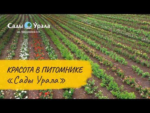 Поле роз - красота в Питомнике Сады Урала. Сентябрь 2016