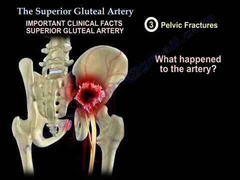 The Superior Gluteal Artery - Everything You Need To Know - Dr. Nabil Ebraheim