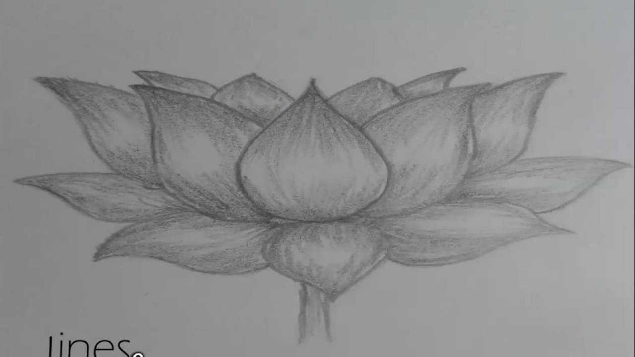 How To Draw Lotus Flower Youtube