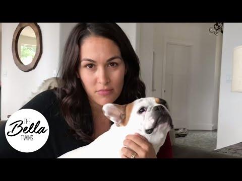 DOG BITE sends Josie Bella to the vet!