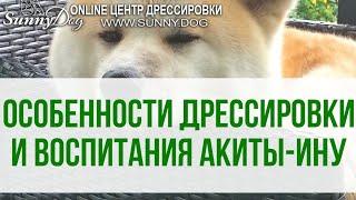 Особенности дрессировки и воспитания собаки породы Акита-Ину