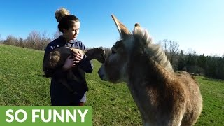 Donkey meets baby goat, instantly falls in love