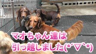 【ドッグライブ①】 https://www.youtube.com/watch?v=iUHVKscLEg4 カメ...